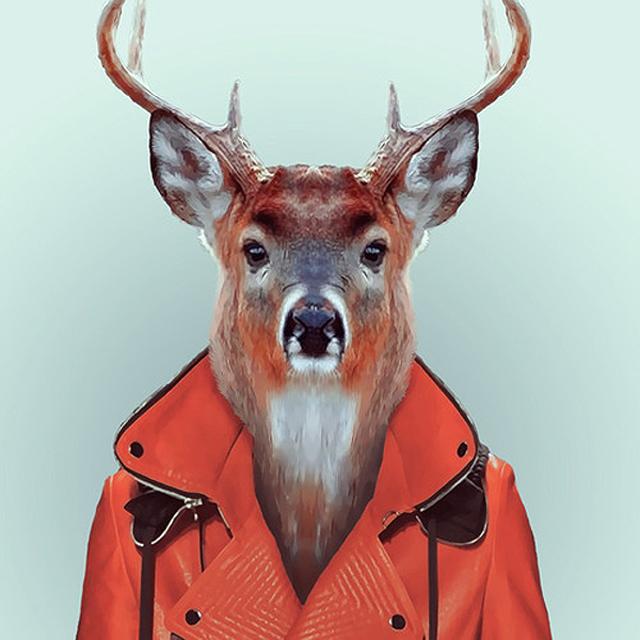 Fashion-Zoo-Animals21